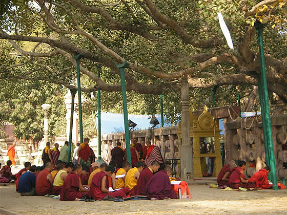 Buddha's original Bodhi tree is long gone but it's descendant is now a shrine.