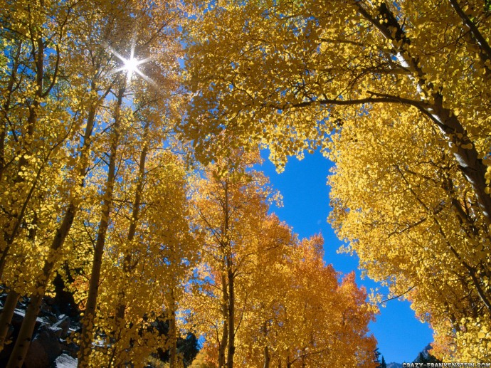 free_sun_shining_through_the_golden_forest_wallpaper-normal