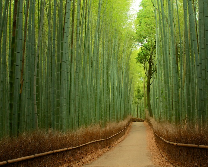 The bamboo forest at Sagano, Japan