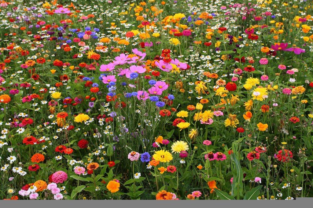 Полевые цветы - Бунин, стихи