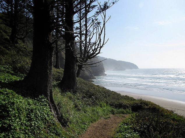 Trail heading out to the beach at Cape Lookout State Park