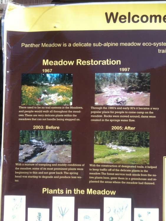 Bulletin board poster of Panther Meadow  over the years and restoration effort.