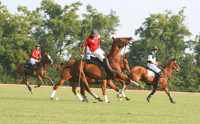 There's a reason why polo is a hobby of the uber-rich.