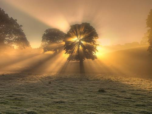 tree-sunburst1